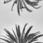 Downside up palmtrees palmeras palmademallorca igersmallorca byn blackandwhite
