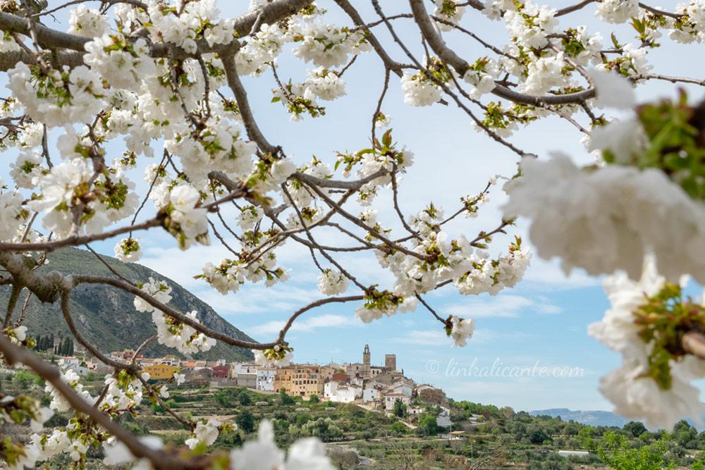 Ruta Cerezos en flor Serra d'Almudaina