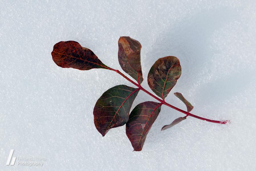 Ramita en la nieve