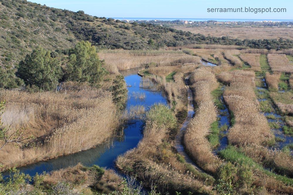 Muntanyeta Verda, Marjal de Pego-Oliva