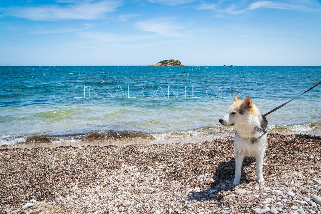 playa-canina-altea-platja-olla-villa-gadea_DSC0206