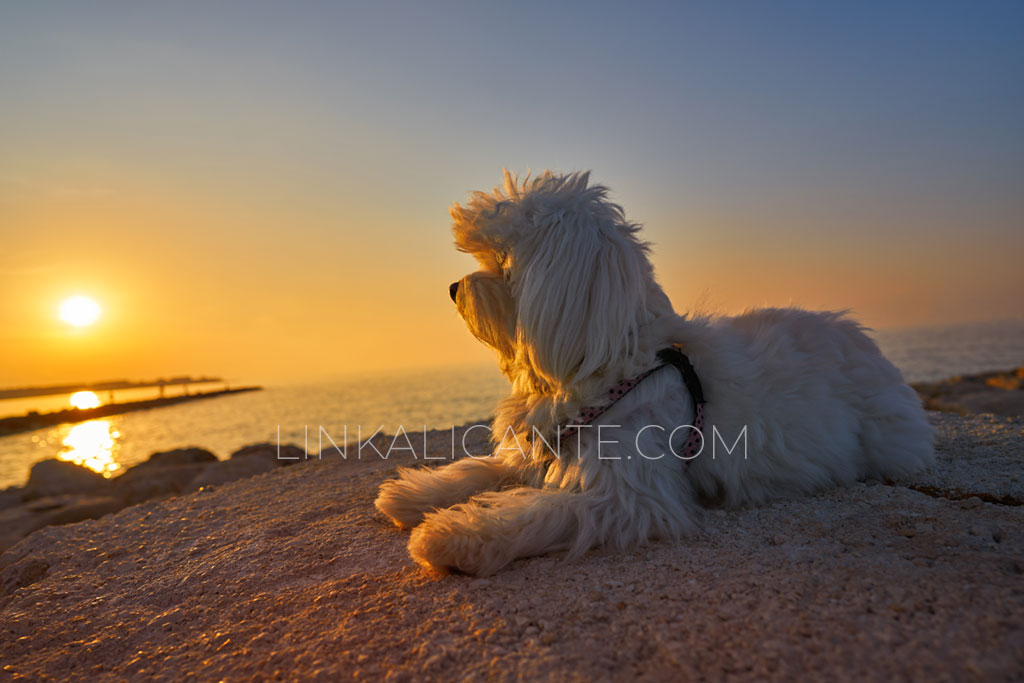 playa-perros-denia-alicante