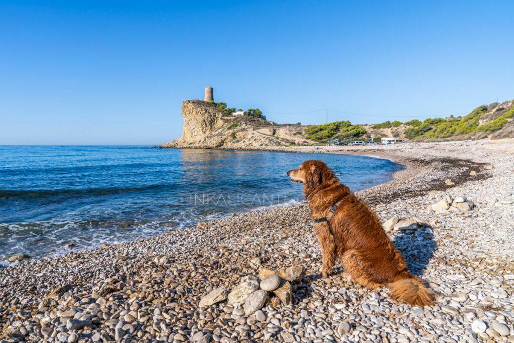 playas-perros-alicante-doggy-beach-costa-blanca