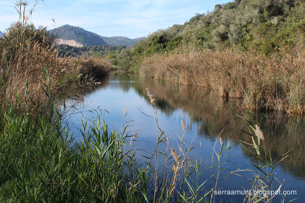 Riu Salinar, Marjal de Pego-Oliva