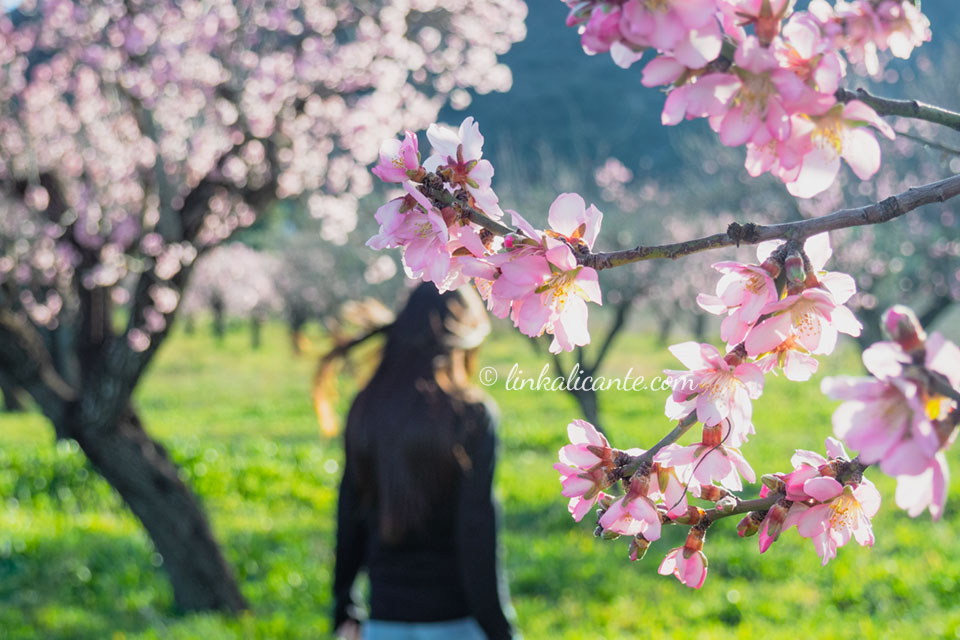 Ruta almendros en Flor de Alcalalí